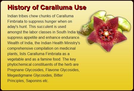 where can i buy caralluma fimbriata in canada